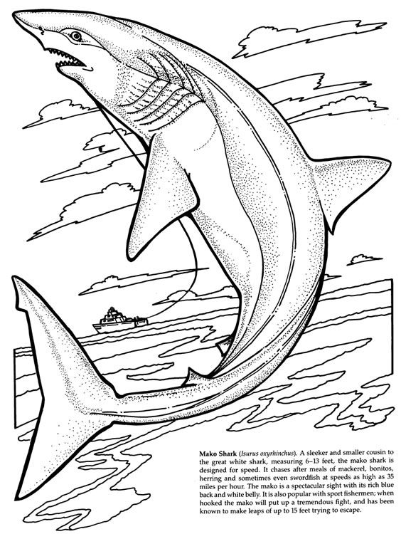 564x750 Hammerhead Shark Clipart Coloring Book