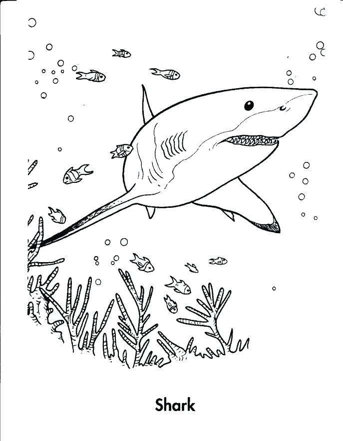 687x885 Hammerhead Shark Coloring Pages Free Picture Great White Medium