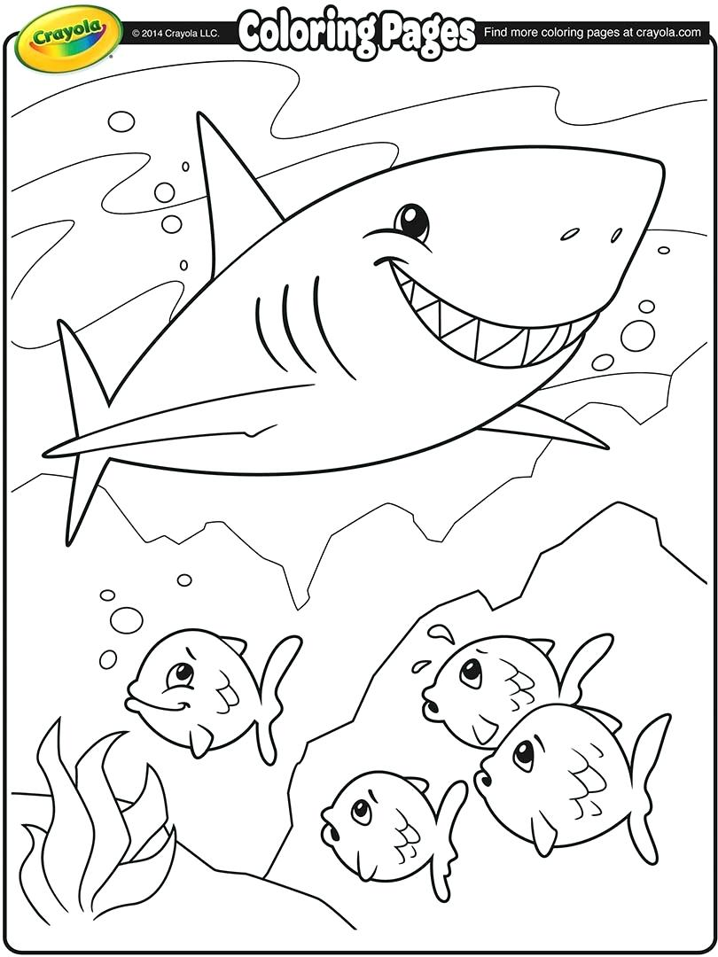 810x1080 Shark Coloring Pages Great Hammerhead Shark Funny Shark Coloring