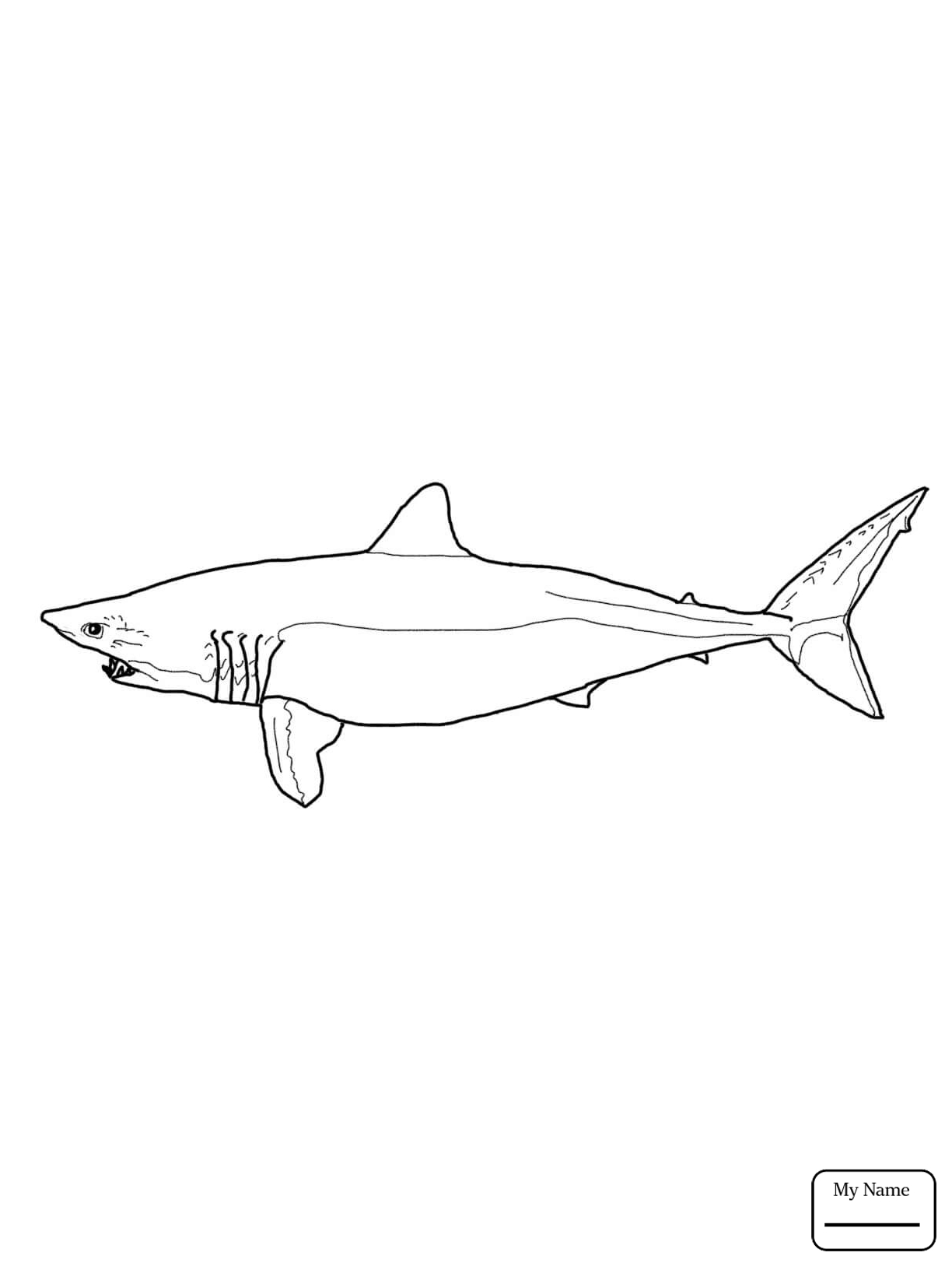 Hammerhead Shark Drawing at GetDrawings.com | Free for personal use ...