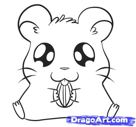Hamster Cartoon Drawing
