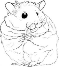 236x270 Hamster Drawing