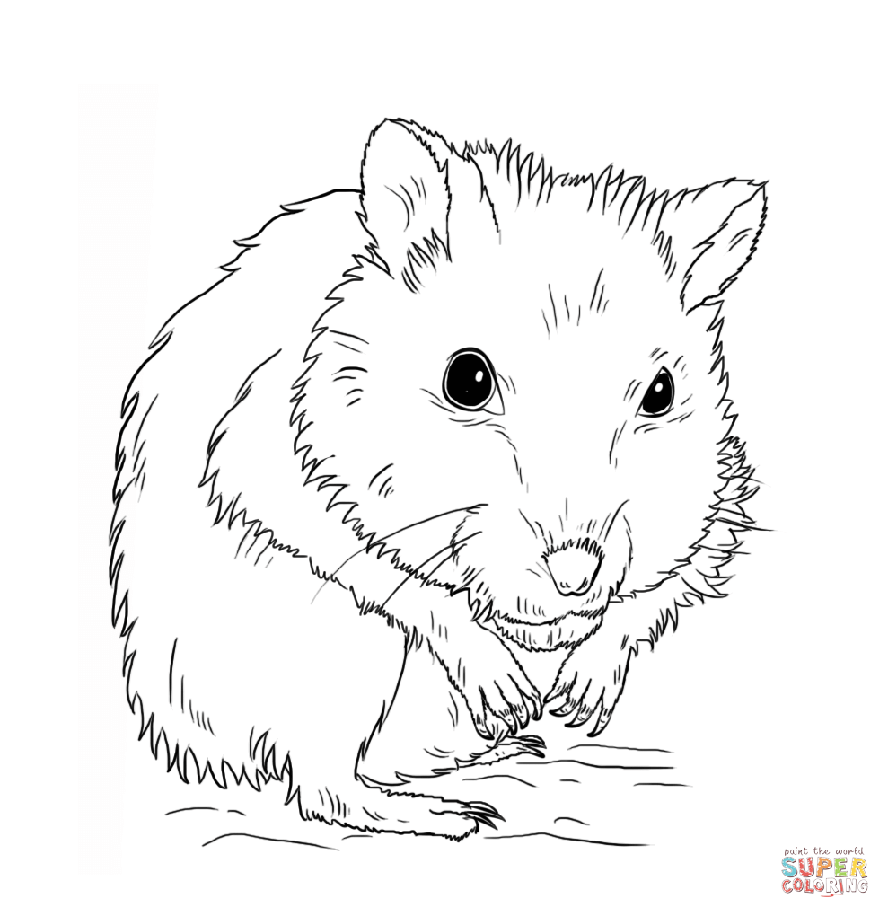 989x1020 Dwarf Hamster Coloring Page Free Printable Coloring Pages
