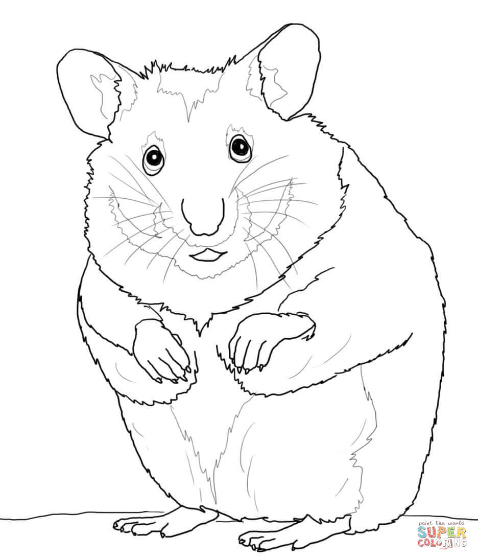 936x1096 Hamsters Coloring Pages Free Coloring Pages