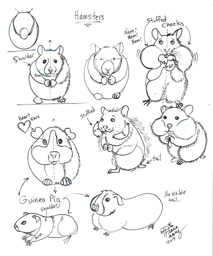 853x1024 How To Draw A Hamster Draw Hamster And Guinea Pig Diana Huang