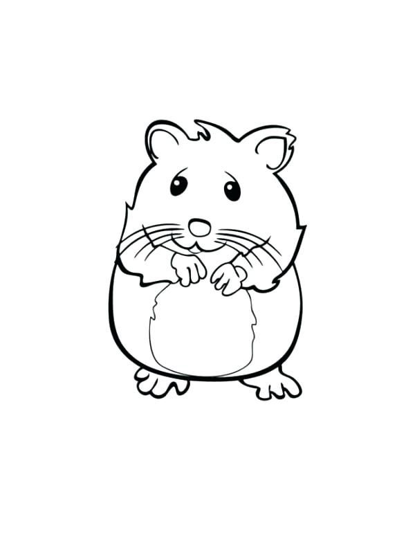 Hamster Drawing at GetDrawings.com | Free for personal use ...