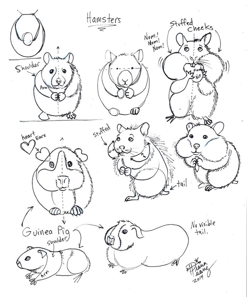 816x979 Draw Hamster And Guinea Pig By Diana Huang