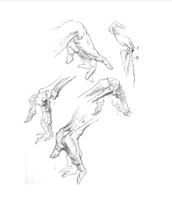 583x690 Anatomy Of Hands Ebook