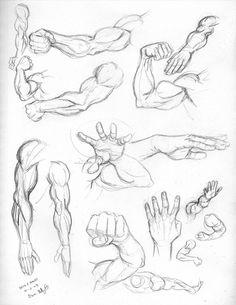 236x305 Brazos Y Manos Masculinas Dibujos Character Design