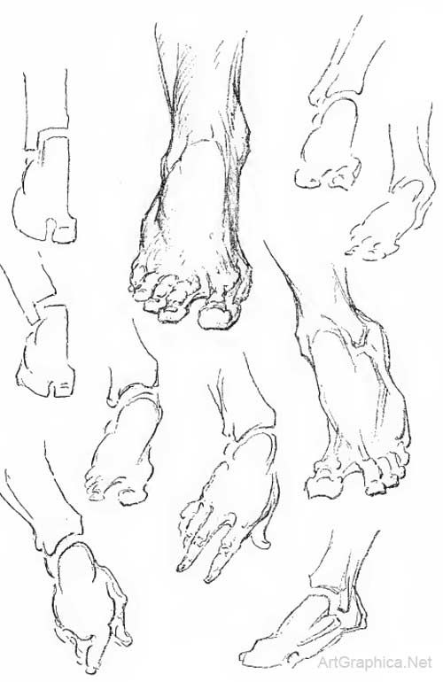 500x770 Drawing Feet And Toes Foot Anatomy For Artists Figure Drawi
