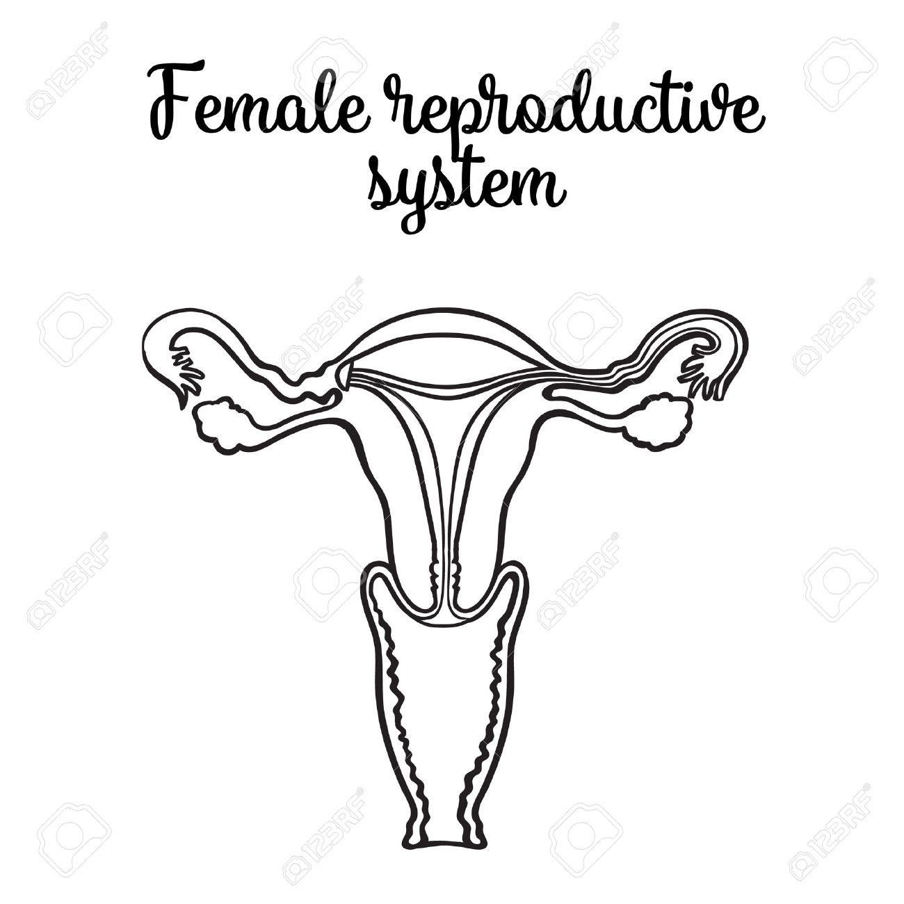 1300x1300 Female Reproductive System, Vector Circuit Sketch Hand Drawn