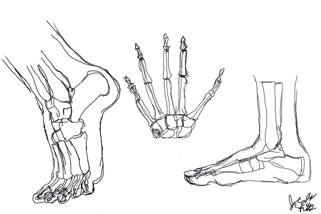 1024x683 Anatomy Studies Hand And Feet By Joycie24