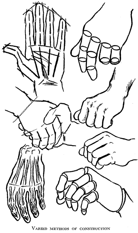 450x758 Drawing Hands How To Draw Hands And Underlying Structure