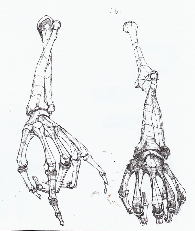 1300x1535 Dynamic Drawing Archive Basic Anatomical Study