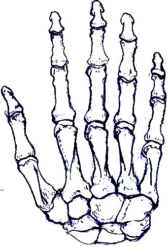 331x487 Skeleton Hand By Ladyham Pie