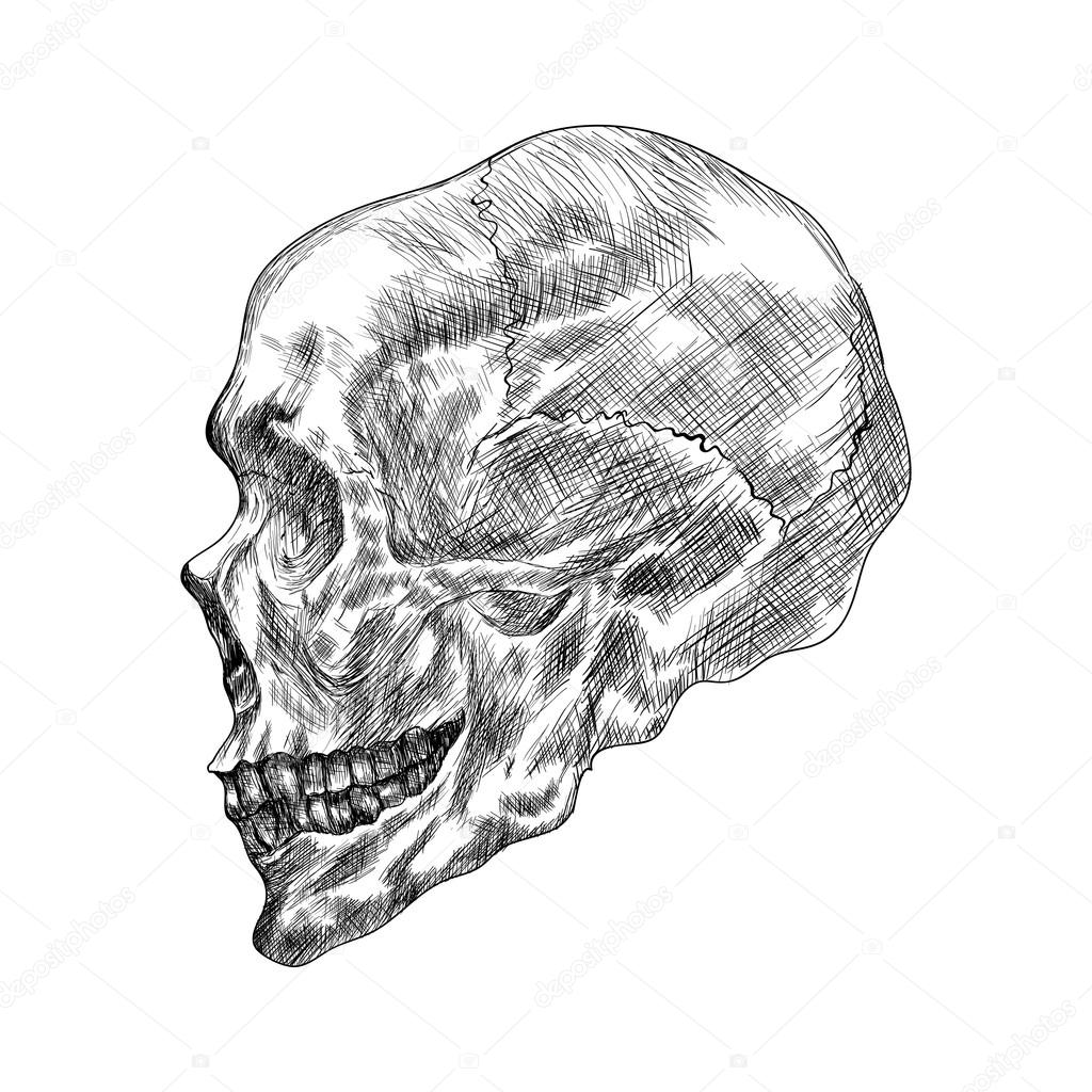 1024x1024 Sketch Of Profile Human Skull. Hand Drawing Vector Illustration