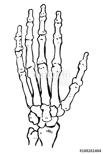 334x500 Vector Illustration Hand Bones Outline Drawing. Orthopedic Human