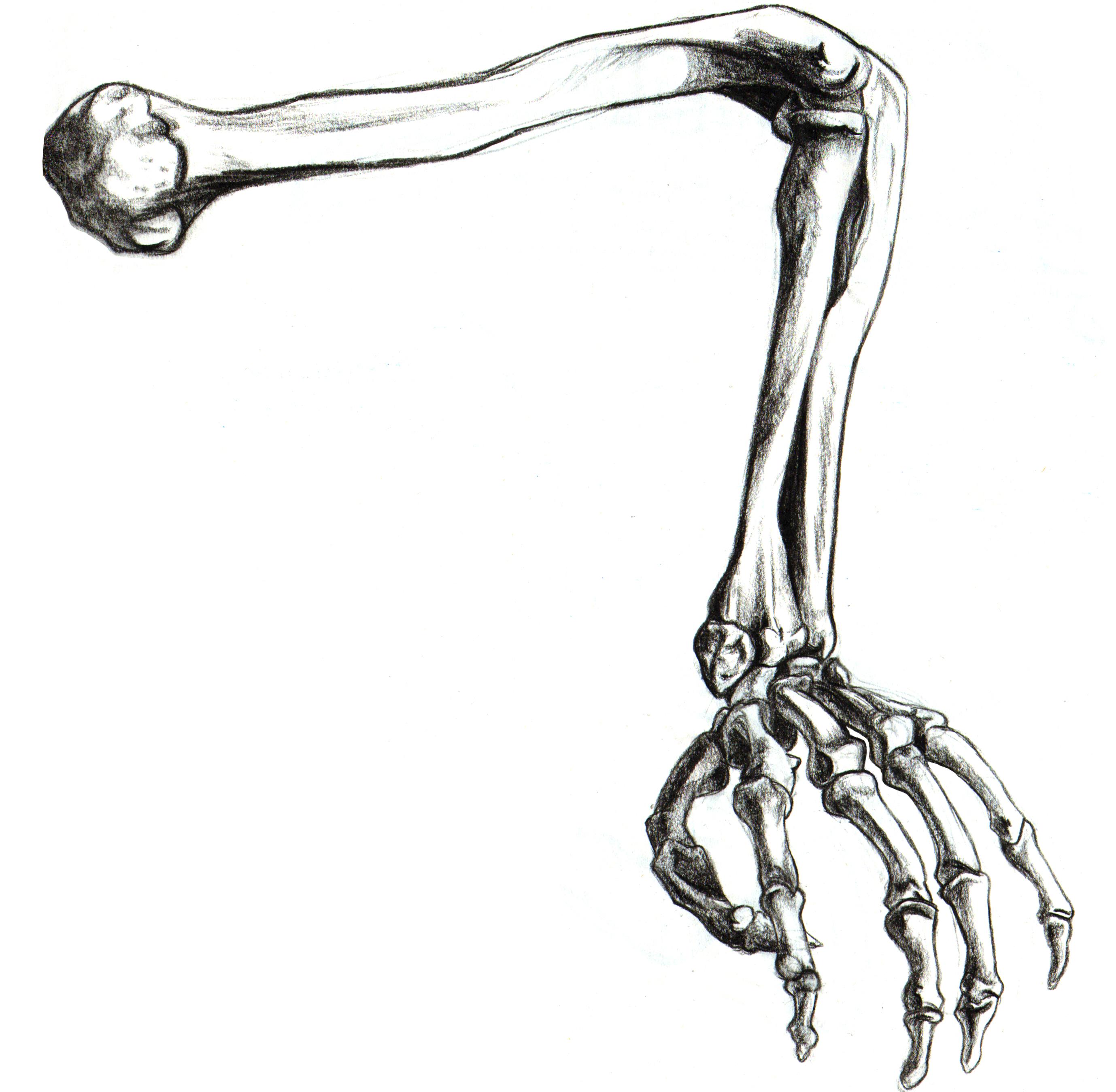2757x2697 Drawn Skeleton Arm