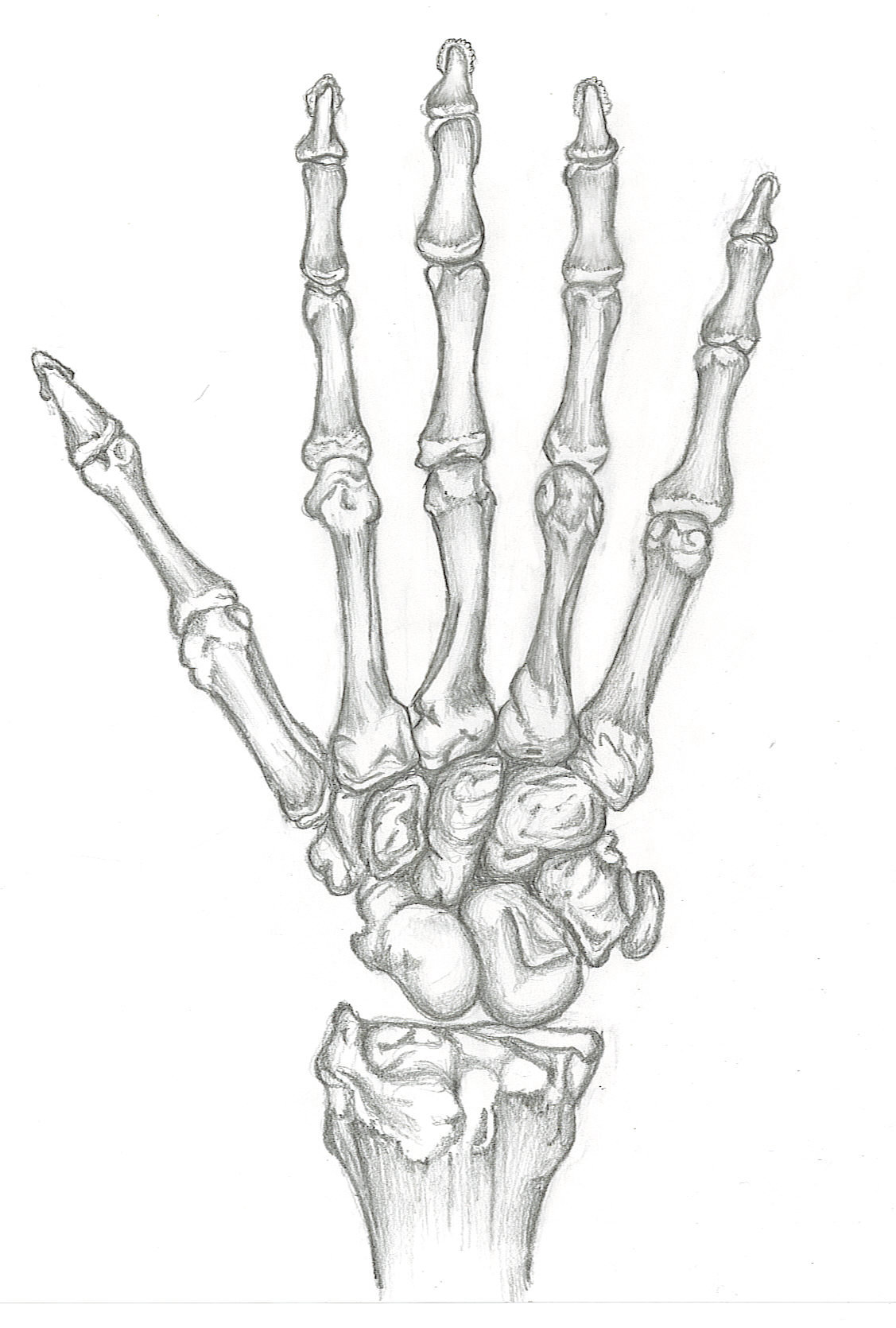 1127x1670 Skeleton Hand Drawing On Hand