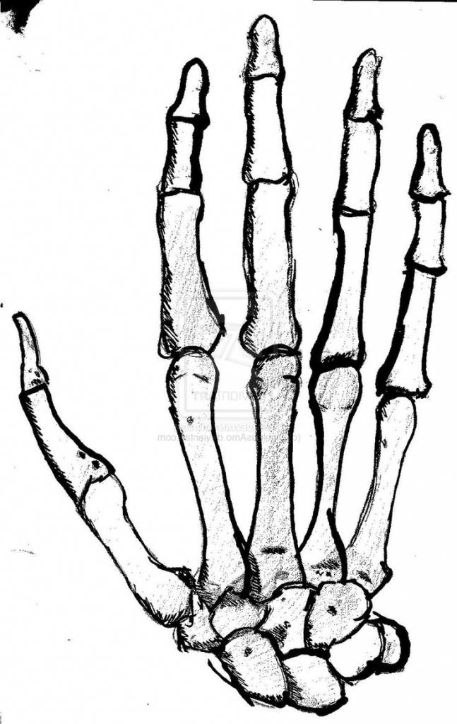 647x1024 Skeleton Hands Drawing