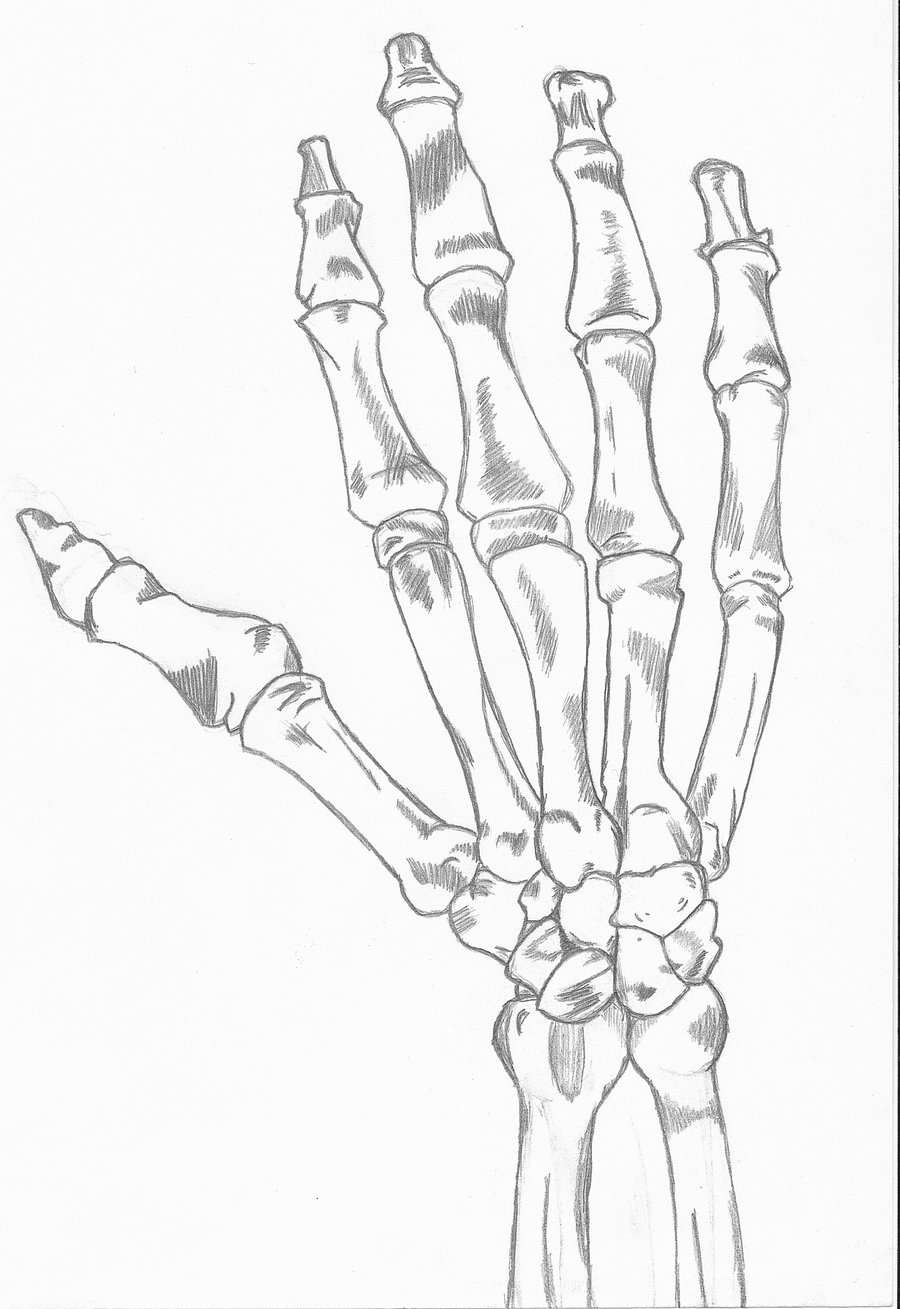 900x1309 Skeleton Right Hand By Hex Sk8ergirl