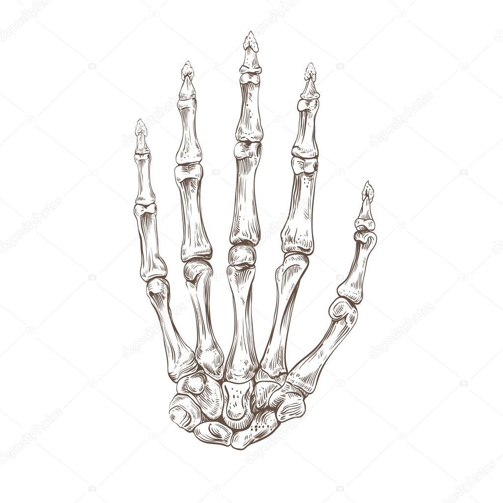 1024x1024 Skeleton Hand Stock Vector Roman84