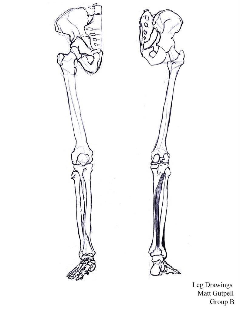 791x1024 The Art Of Matt Gutpell Bones Finally Done For Life Drawing