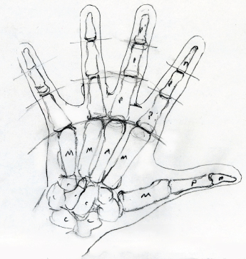345x364 Bone Drawing On Hand Easy
