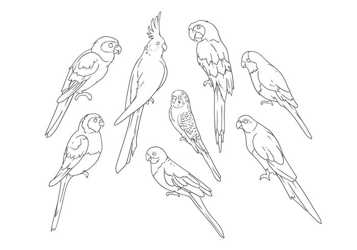 700x490 Free Hand Drawing Parrots Vector