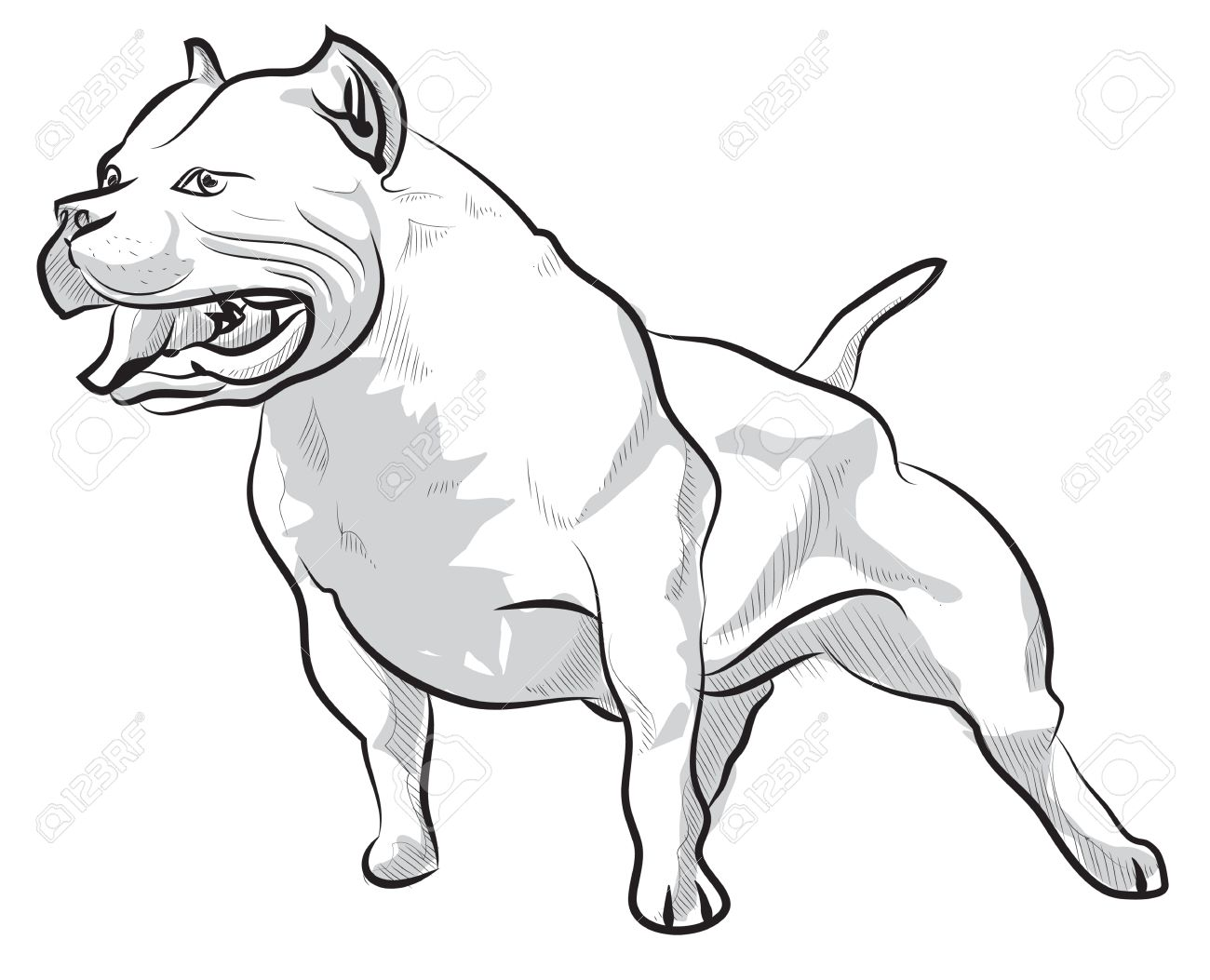 1300x1053 Vector Sketch Hand Drawing Illustration Pitbull Barking Royalty