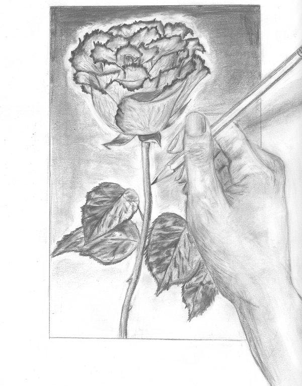 600x767 Rose Drawing + Hand By Kiki Mix Twix