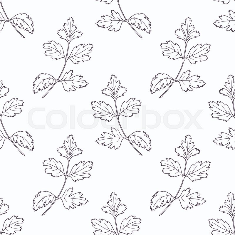 800x800 Hand Drawn Parsley Branch Outline Seamless Pattern. Doodle Drawing