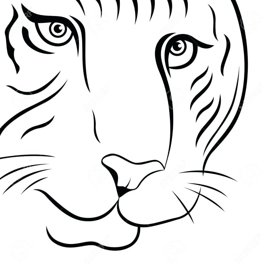 863x863 Tiger Coloring Page Siberian Outline Drawing Images Lily Tiger