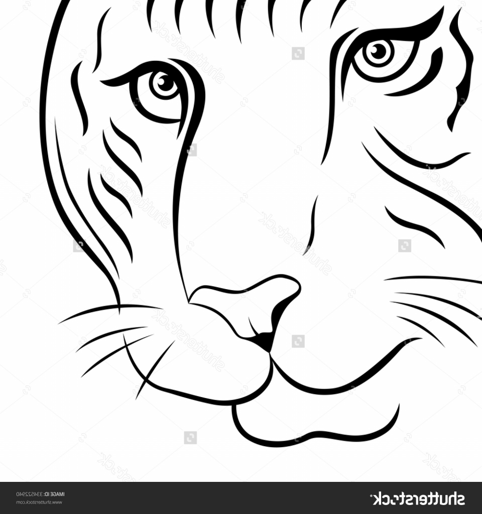 960x1024 Tiger Drawing Outline Part Of Funny Tiger Face Hand Drawing Vector