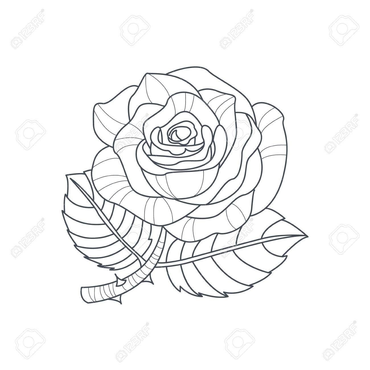 1300x1300 Rose Flower Monochrome Drawing For Coloring Book Hand Drawn Vector
