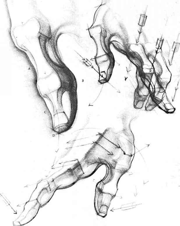 618x777 Wedge Masses Of Hand And Foot