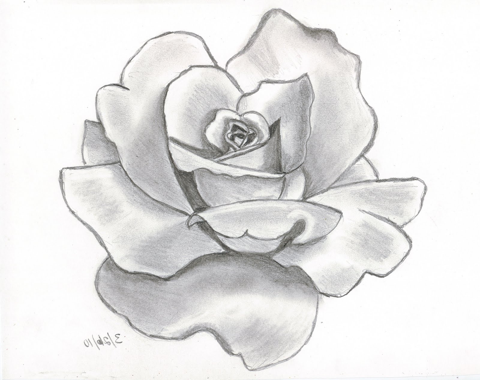 1600x1268 Rose In Hand Pencil Sketch