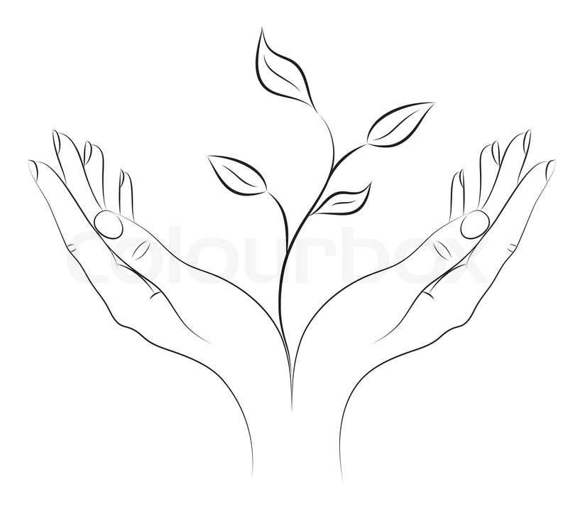 800x720 Young Plant In Female Hands Stock Vector Colourbox