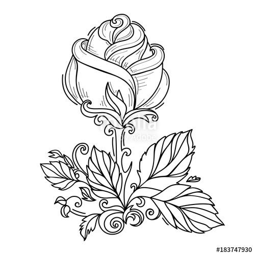 500x500 Vector Hand Drawn Sketch Style Elegant Vintage Rose Wild Flower