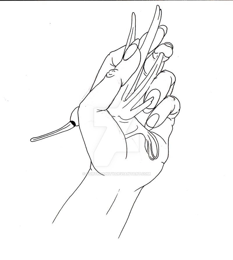 800x894 Hand Line Drawing [Holding Glass Bird] By Forthsanity