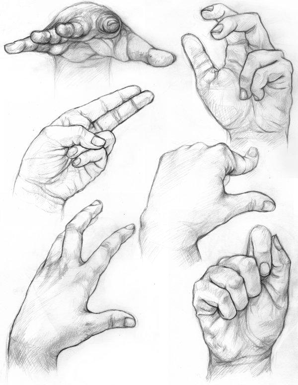 600x776 Hand Studiesdrawing Wcontour Lines Passart