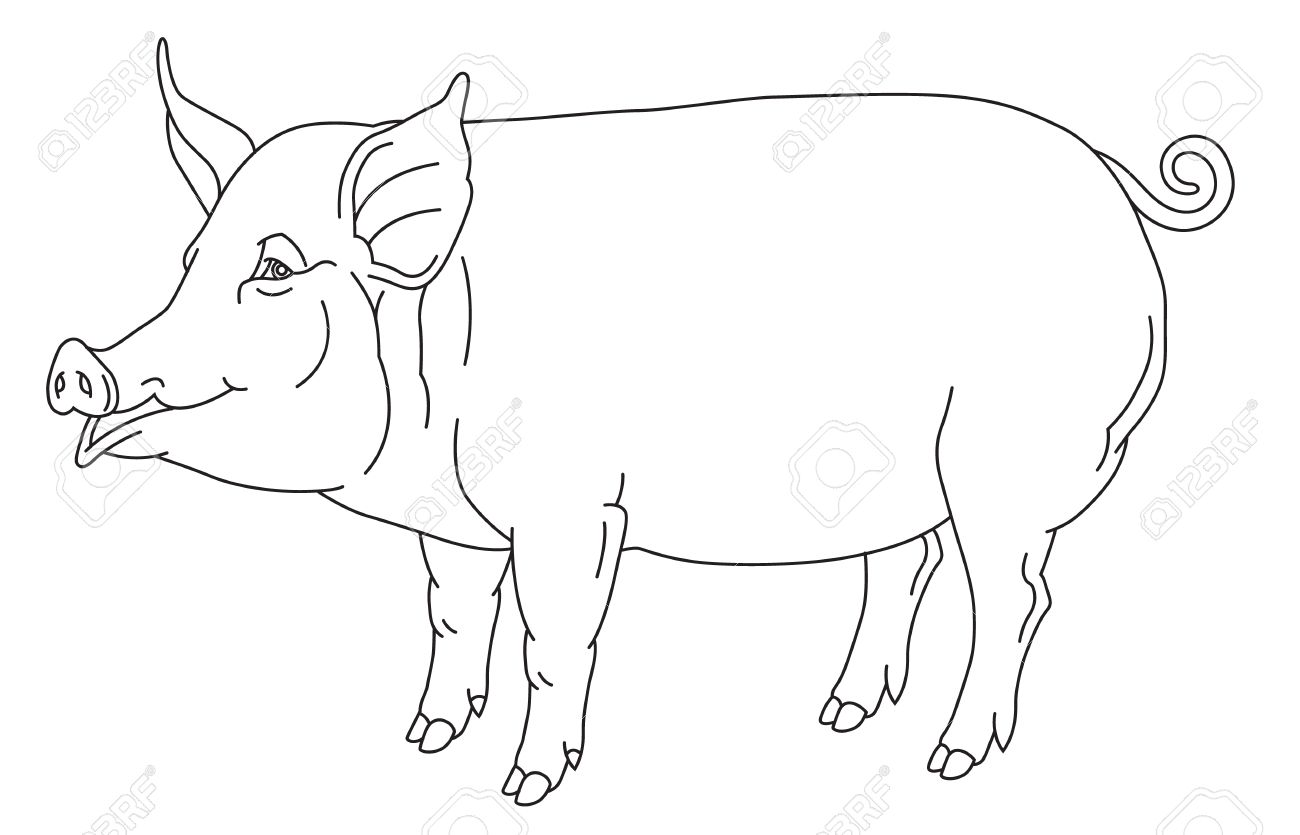 1300x835 Outline Hand Drawing Of Domestic Pig