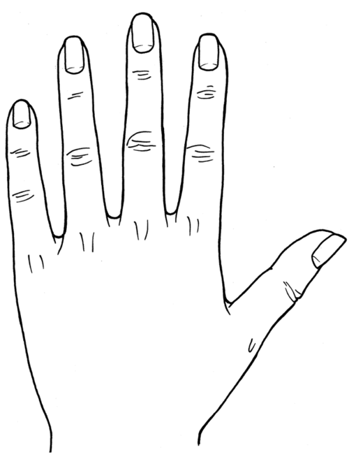 500x657 Hand Reading (Whole) Palm Reading Guide
