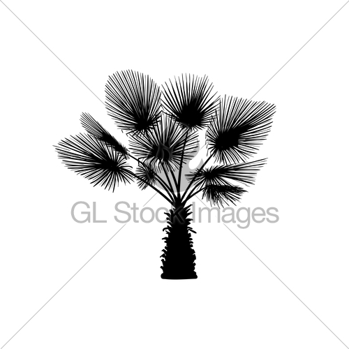 500x500 Sketch Palm Tree. Hand Drawn Silhouette Palm Tree Gl Stock Images