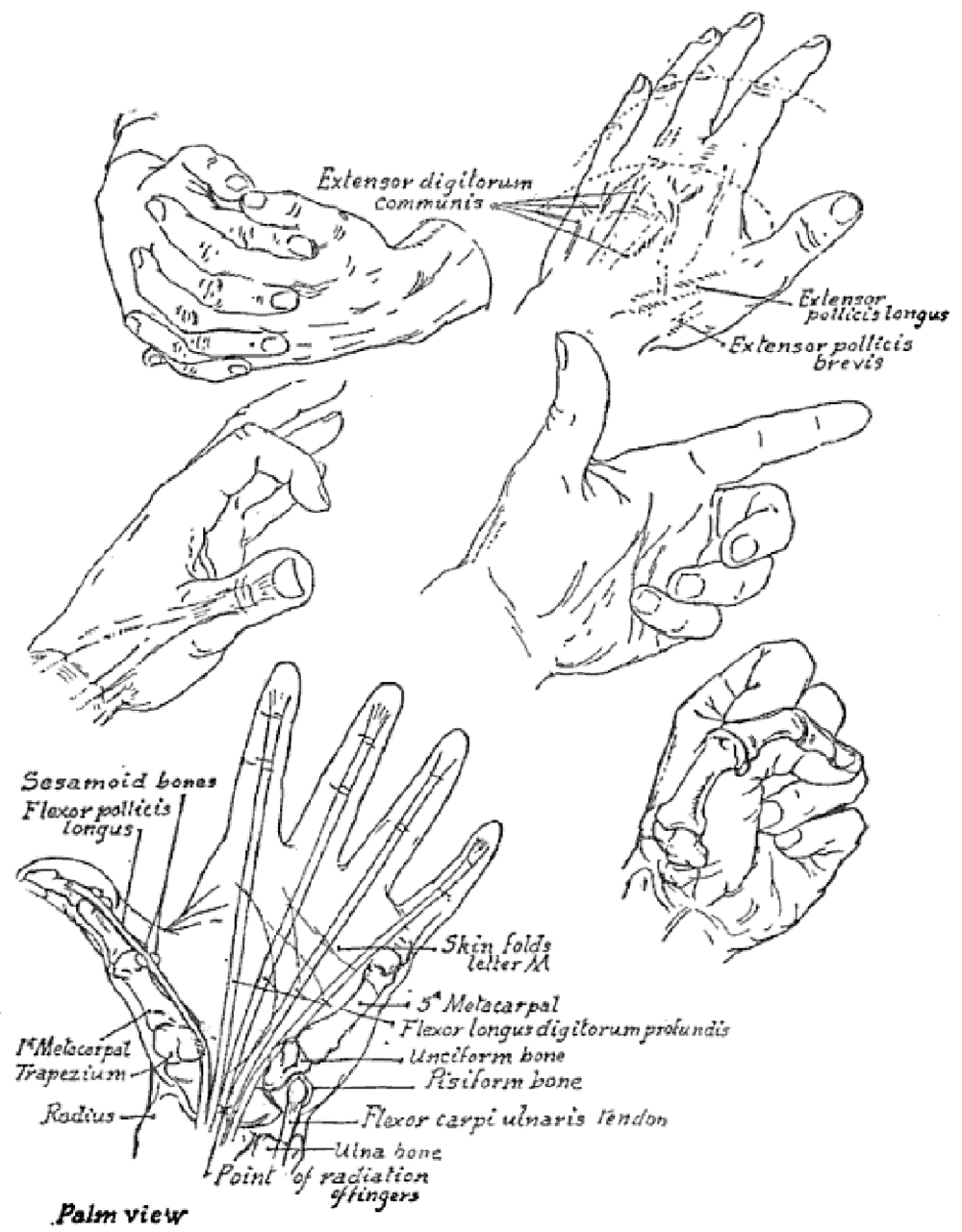 1000x1281 Drawing Hands Techniques For How To Draw Hands With References