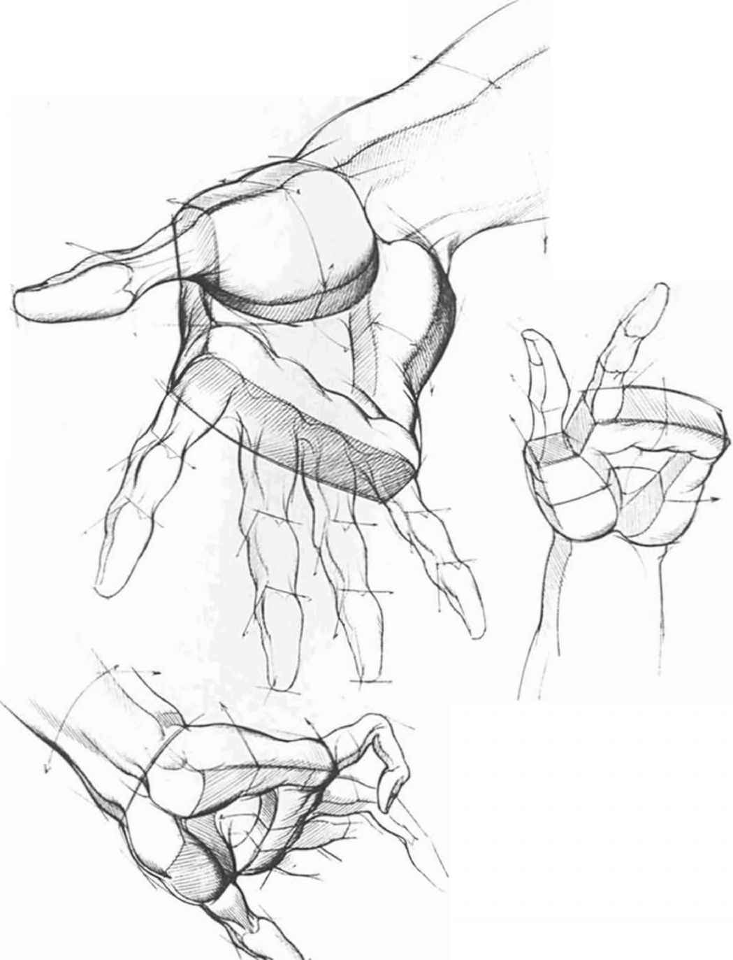 1049x1373 Drawing The Hand Different Position Figureampaction Pose