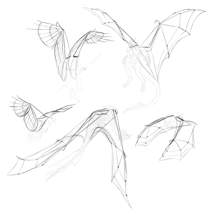 700x706 How To Draw And Animate Wings Birds, Bats, And More