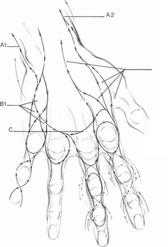 650x953 Drawing Hand Andrew Loomis Body And Anatomy Andrew