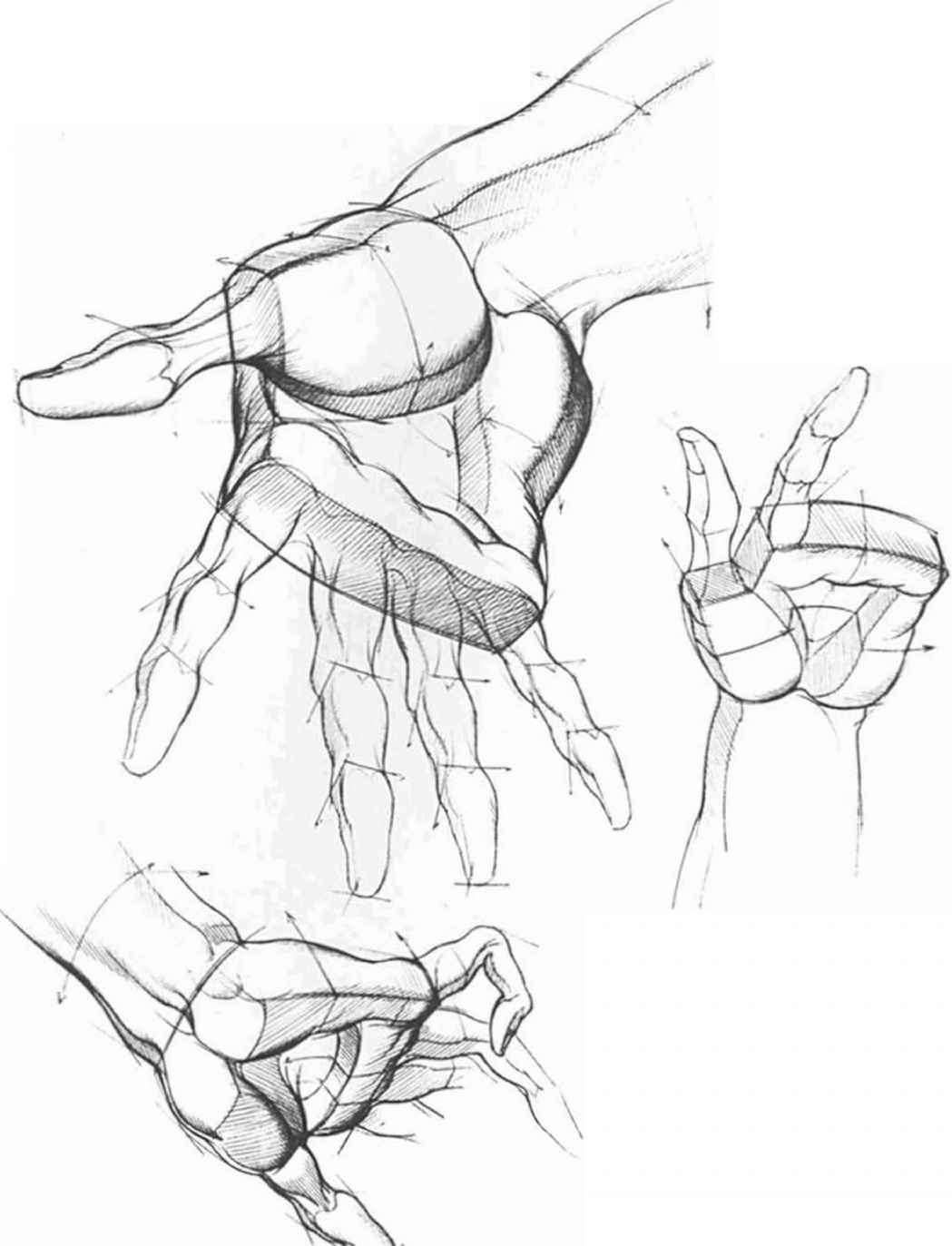 1049x1373 Drawing The Hand Different Position Hand Research