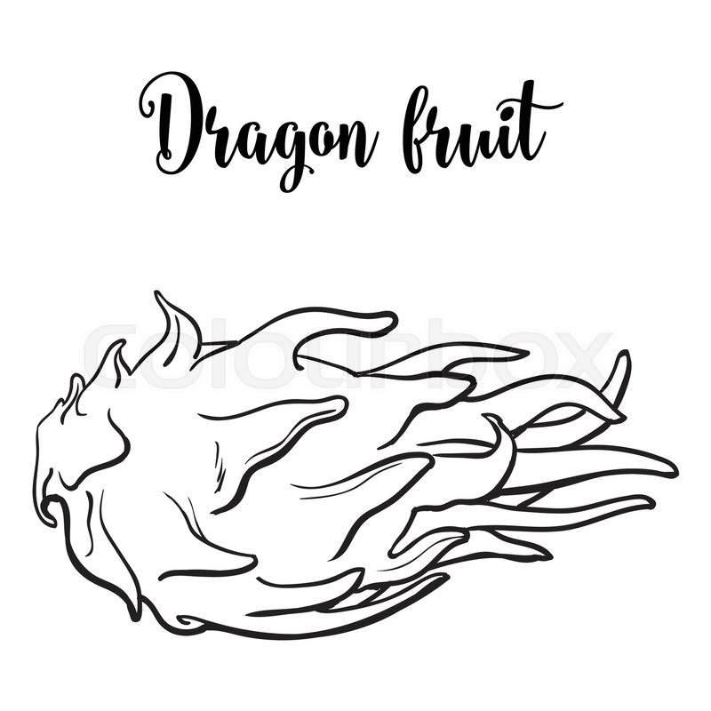 800x800 Whole Unpeeled, Uncut Dragon Fruit In Horizontal Position, Sketch